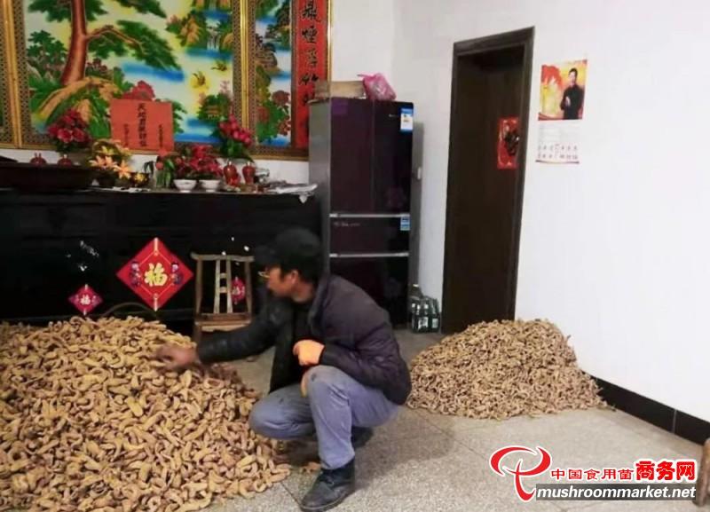 陕西省丹凤县贫困户靠种植天麻年入6万元