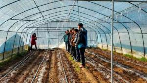 陕西省商洛市商州区羊肚菌基地正值丰收季 菇农采摘忙