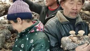 河南省西峡县:香菇大棚筑牢防返贫屏障