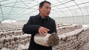 贵州省毕节市七星关区食用菌合作社发展食用菌种植产业 年产90万斤