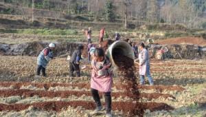 贵州省务川县:种植赤松茸 播撒新希望