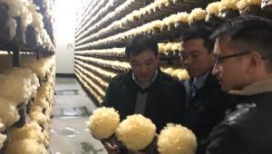 福建省古田县率先应用生鲜银耳冷链物流技术 产品迅速发往全国各地