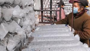 湖北省安陆市:小香菇变成脱贫致富小金伞