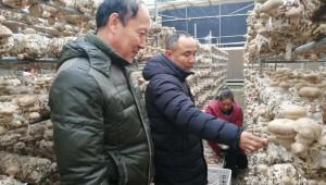 河南省三门峡市农科院专家赴卢氏食用菌基地指导抗寒防风工作