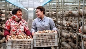 """河南省汝阳县""""香菇西施""""直播带货忙 闯出致富新路径"""