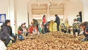 云南省彝良县:天麻产业带动6万群众增收