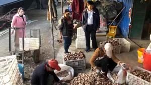 河南省桐柏县:小香菇大产业 助力脱贫致富梦