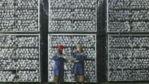 四川省雅江县:小菌菇敲开致富门 打造出大产业
