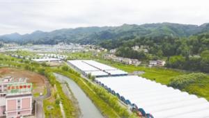 """贵州省毕节市: """"四链一体""""做强食用菌产业"""