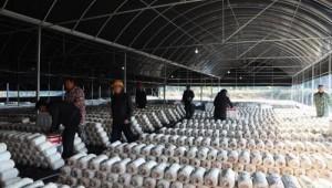 江西省萍乡市:小小蘑菇产业蕴含强大力量 鼓舞激励着大众