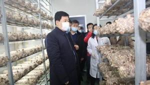山东省邹城市委书记张百顺调研食用菌产业发展情况