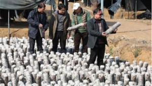 湖南省道县多部门前往宁远县食用菌基地考察学习