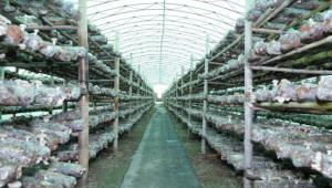 山西省沁源县:菌类种起来 农民富起来