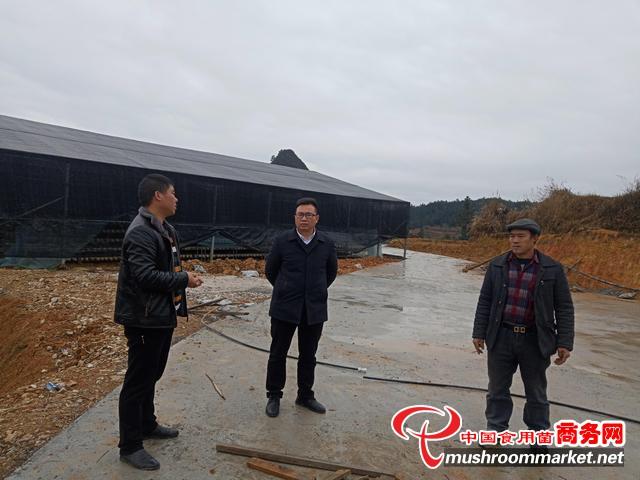 贵州省三都县人民政府副县长杨秀举到周覃镇高丰村调研香菇种植项目