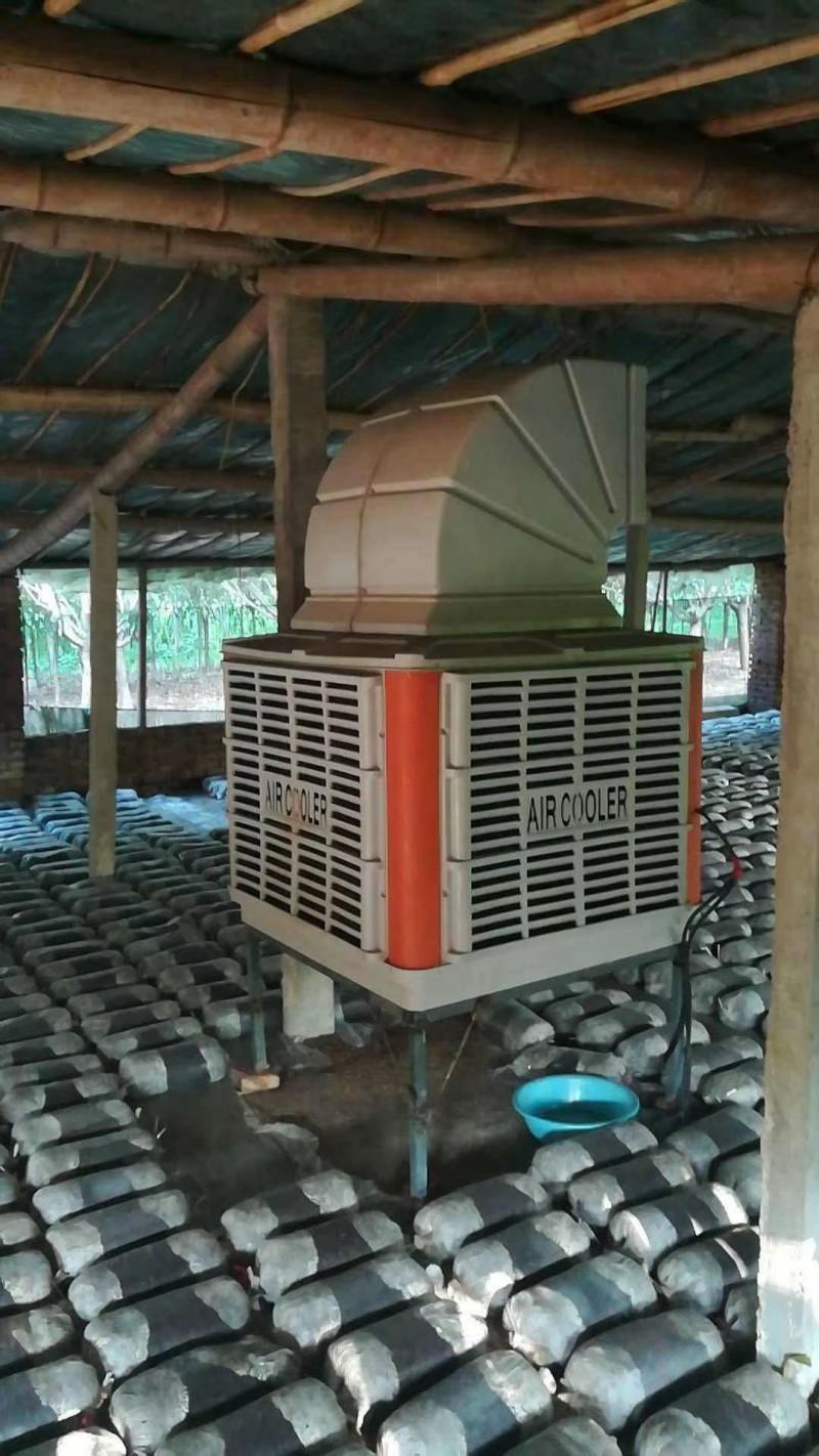 降温送氧风机水帘冷风机