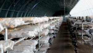 甘肃:临泽县加快现代丝路寒旱农业食用菌产业园项目建设