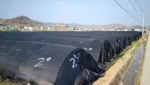 湖北省房县:建立成熟技术模式 千亩羊肚菌喜获丰收