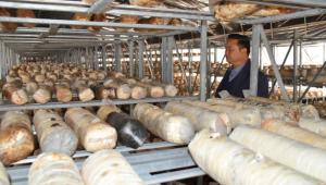 江西上犹县人大代表邝圣海:助力安和乡打造食用菌产业示范乡镇
