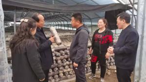 黑龙江省汤原县领导与河南世纪香食用菌公司洽谈食用菌深加工项目