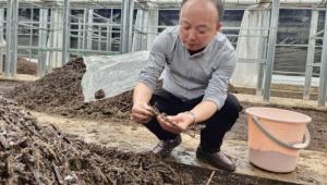"""""""沅江芦菇""""探路者石跃龙:将暮气沉沉的芦苇产业转变为朝气蓬勃的芦菇产业"""