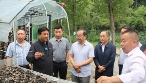 陜西省山陽縣:規劃引導木耳產業高質量發展 有效帶動貧困群眾穩定增收