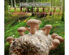 灵宝香菇菌棒厂 昌盛优质香菇菌棒厂家直销
