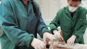 湖北省竹溪縣:選育新品種 做大香菇產業鏈