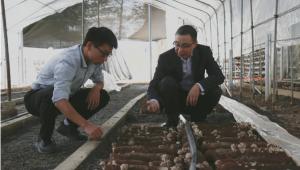 焦海涛:扎根深山20余年 把青春年华献给远安食用菌事业
