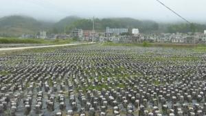 """贵州安龙县:能人带动 """"菌+N""""产业发展旺"""