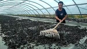 哈爾濱市通河縣:蘑菇大棚二次利用 有效提升附加值