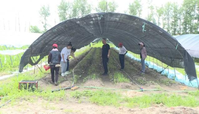 黑龙江省讷河市:发展赤松茸产业 助农增收