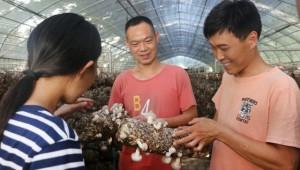 河南省尉氏县曹保军:6个香菇大棚 年净收入30万元