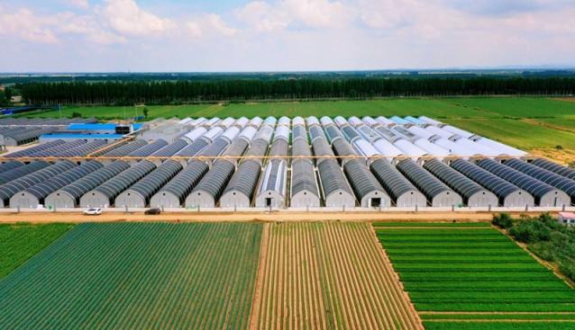山東省青島市蓼蘭鎮產業園智能化種植香菇 年產能2萬噸