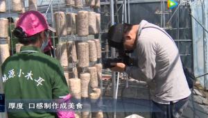 央視《誰知盤中餐》欄目攝制組前往吉林省延邊州汪清縣采訪拍攝黑木耳基地