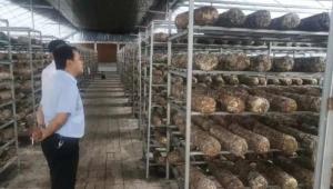 河南省邓州市香菇产业发展迅猛 深加工项目不断完善