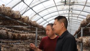 河北省阜平县:食用菌香飘红色老区 起点高 谋划深 发展快