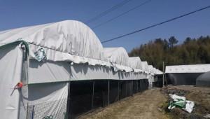 福建省永安市貢川鎮:發展食用菌種植項目 開啟產業致富路