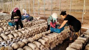 甘肅省古浪縣:打造食用菌特色產業 賦能鄉村振興