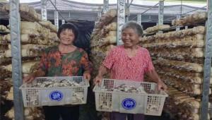 湖南省江华县新山友生物科技有限公司秀珍菇成为致富产业