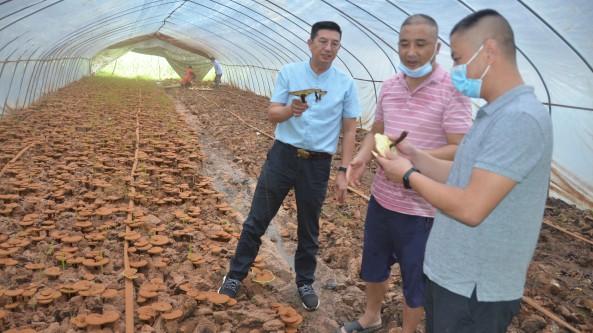 湖北省隨州市食用菌協會組織專家服務隊深入隨縣均川鎮指導