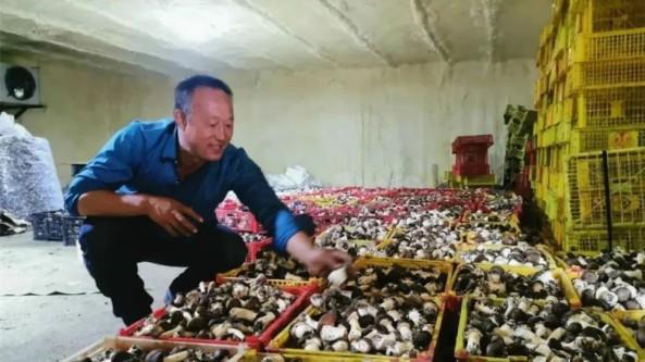 内蒙古扎兰屯市发展林下大球盖菇经济 增加百姓收入