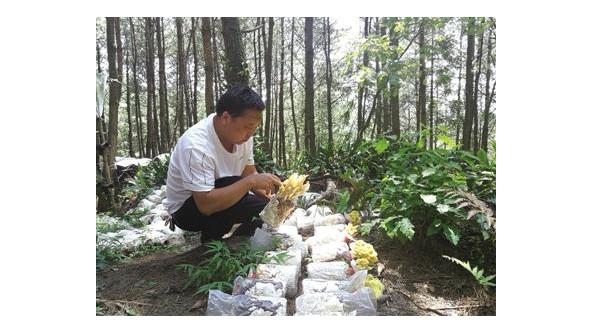 贵州省六枝特区月亮河乡发展林下食用菌产业园 带动产业兴旺