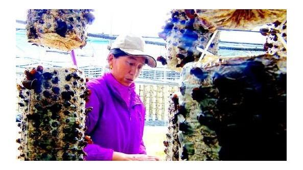 甘肃省迭部县尼傲乡:建设黑木耳种植基地 增加群众收入