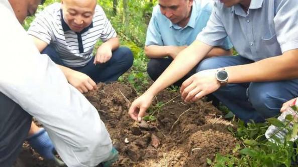貴州省黔西南州龍吟鎮積極發展林下天麻種植產業