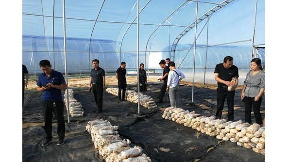 陕西省白水县农技中心党支部组织观摩鲲鹏食用菌专业合作社生产基地