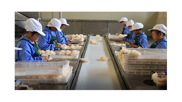 福建省古田县:布局全产业链 打造食用菌产业基地