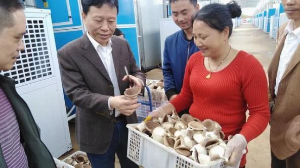 江西省余干县:发展菌菇产业 带动农民增收