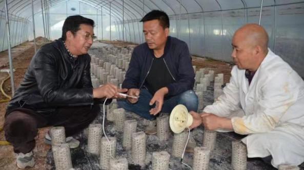 湖北省随州市香菇产业链、供应链现代化水平急待提升