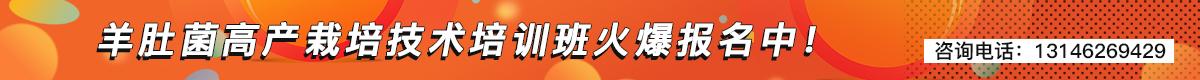 中国北方首届羊肚菌高产栽培技术培训班