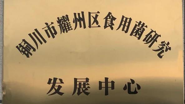 陕西省耀州区农业农村局引进高层次人才 发展食用菌特色产业